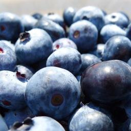 Starbuck's Blueberry Farm